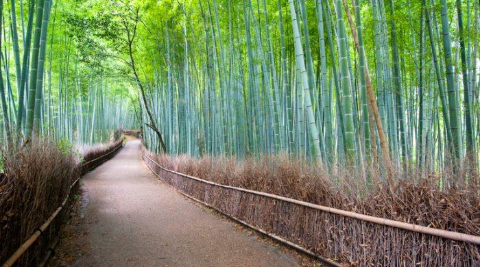0bbf98a5a2d3a65c4e17feb1baa630ff-arashiyama-bamboo-grove