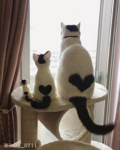 heart cat.jpg